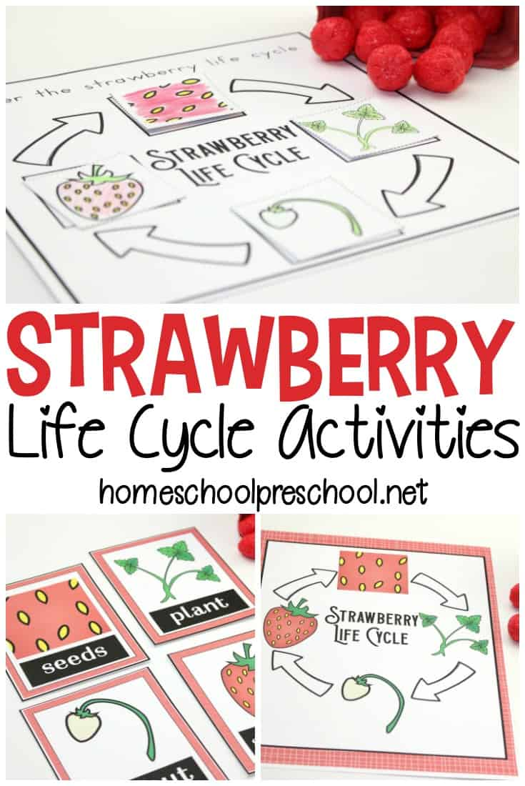 Strawberry Life Cycle Worksheet Pack Summer Learning Life Cycles Teaching Preschool [ 1100 x 735 Pixel ]