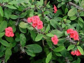 Trujace Rosliny Doniczkowe E Ogrodek Plants