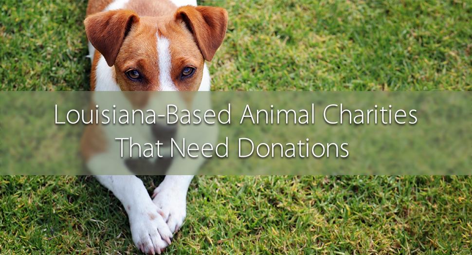 6 Louisiana Animal Charities That Need Donations Pet