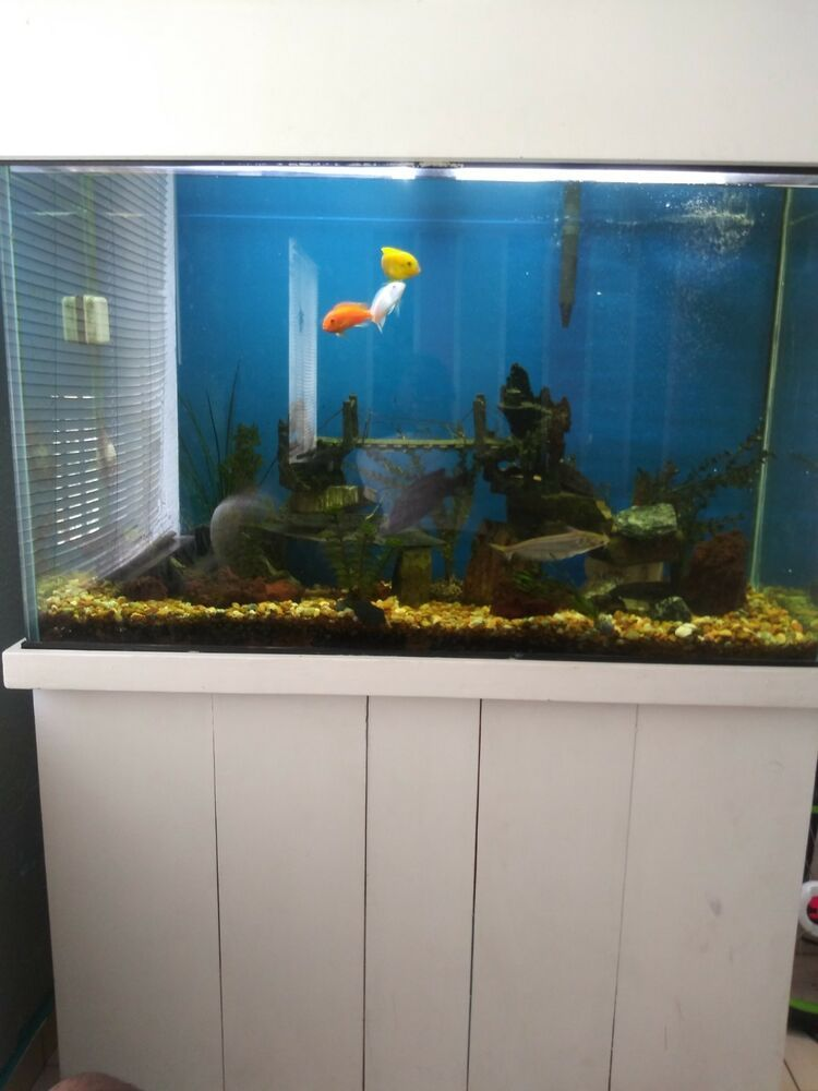 120 Gallon Fish Tank Inculdes Lights Fish Net Stones Decoration Everything Fresh Water Fish Tank Fish Tank Aquarium Fish Tank