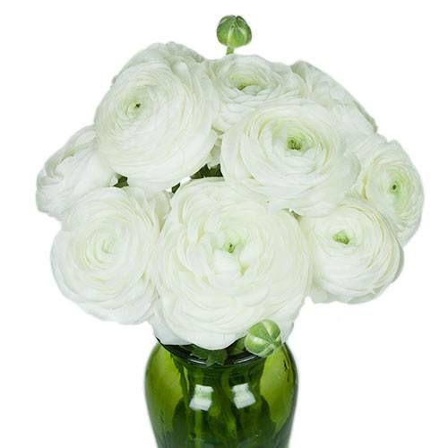 White Ranunculus Fresh Cut Flower In 2018 White Wedding Flowers