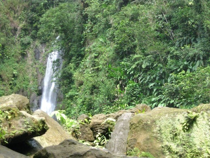 Pin by Janice J. Evans on Puerto Rico Roseau dominica