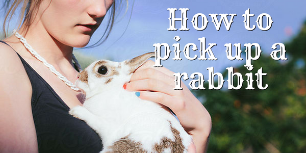 How To Pick Up A Rabbit Rabbit Rabbitgrooming Cute Bunny Rabbit Animals