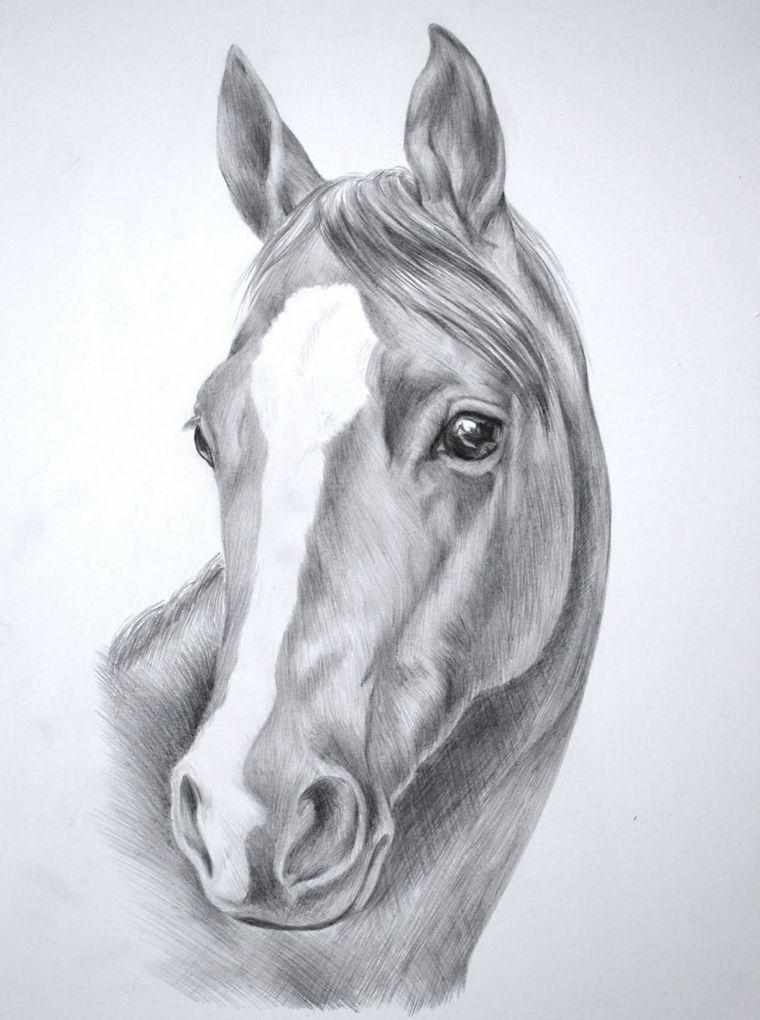 disegni-a-matita-semplici-proposta-muso-cavallo-striscia-bianca ...