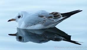 Afbeeldingsresultaat voor eenden in de sneeuw