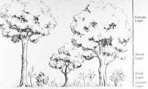 horizontal ecological structure of british woodland