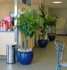 Interior Plants With Architecural Design Minded Upgrade Containers A Win