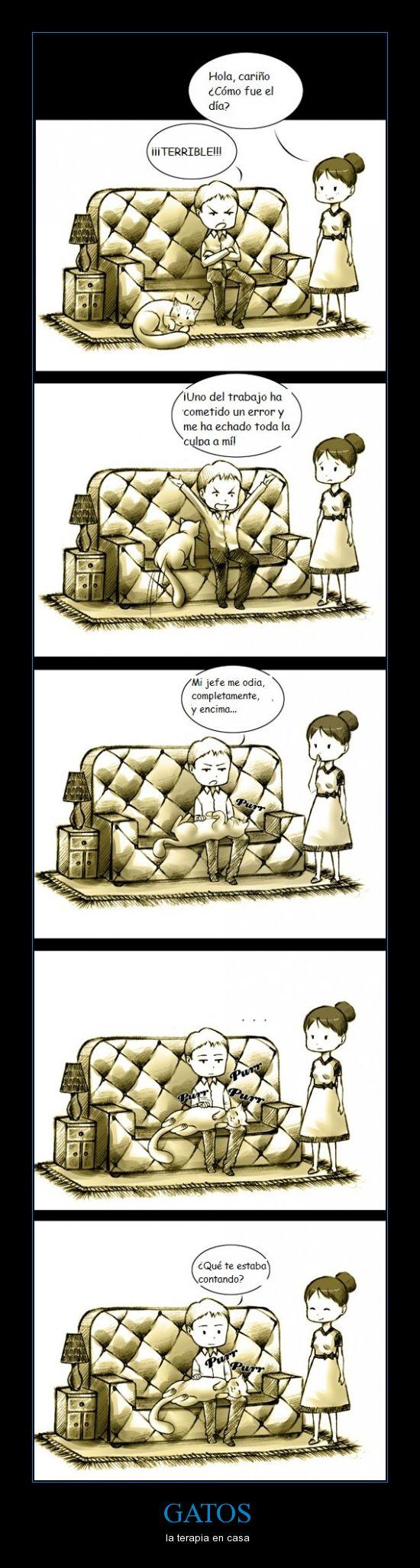GATOS - la terapia en casa