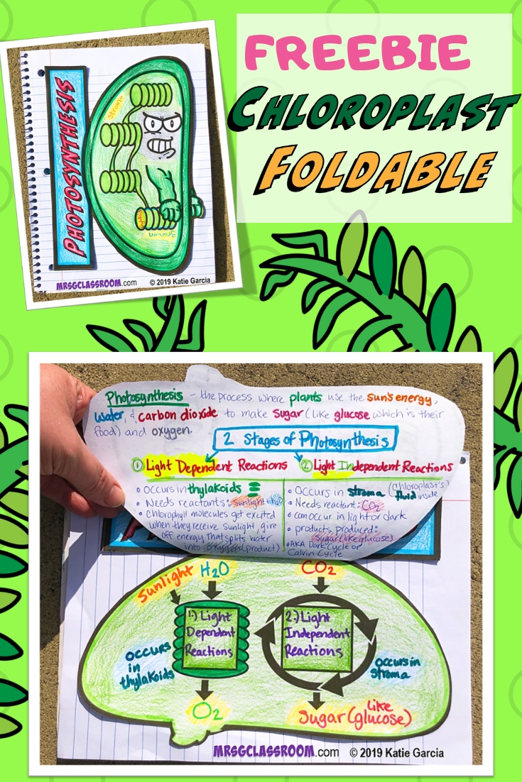 HERE ARE 7 AWESOME FOLDABLES TO LIVEN UP YOUR SCIENCE