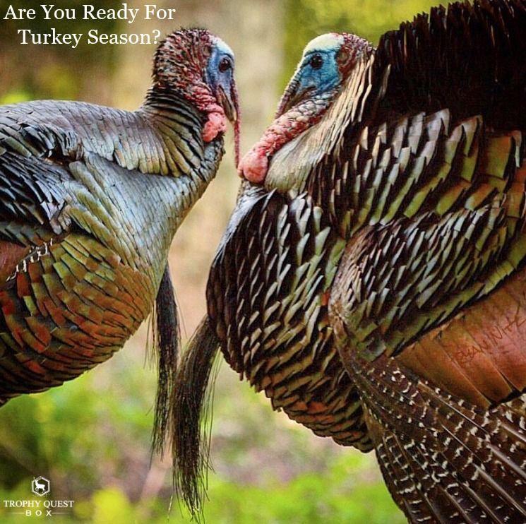 Are you ready for turkey season tqb turkey season