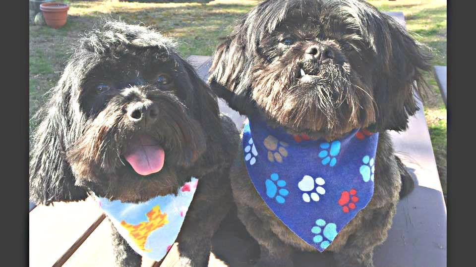 'Guinness and Bailey all ready for Spring. Thanks Doggy Dooz! ❤❤❤❤❤' - Susan McMullan.  Styling Team - Paula & Whitney