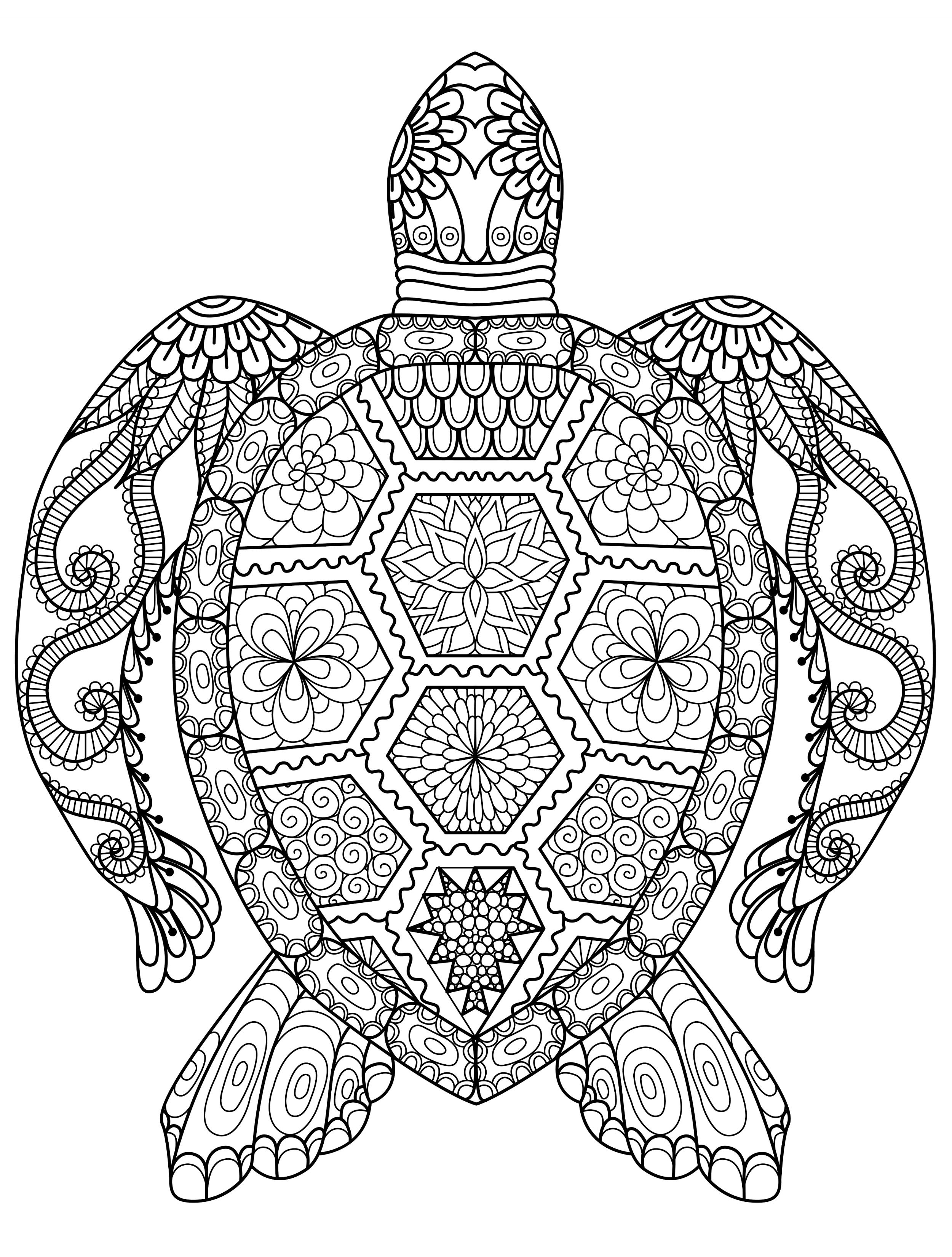 Sea Turtle Coloring Book For Adults Vector Illustration Anti