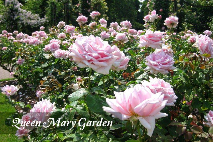 Taman Bunga Mawar Terindah Di Dunia Ideku Unik