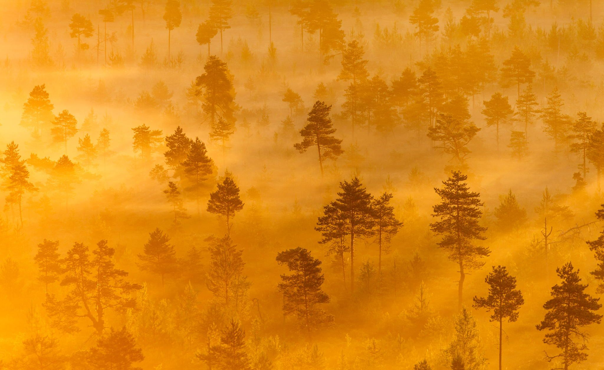 Photograph Misty Trees in the Morning by Teemu Tretjakov on 500px