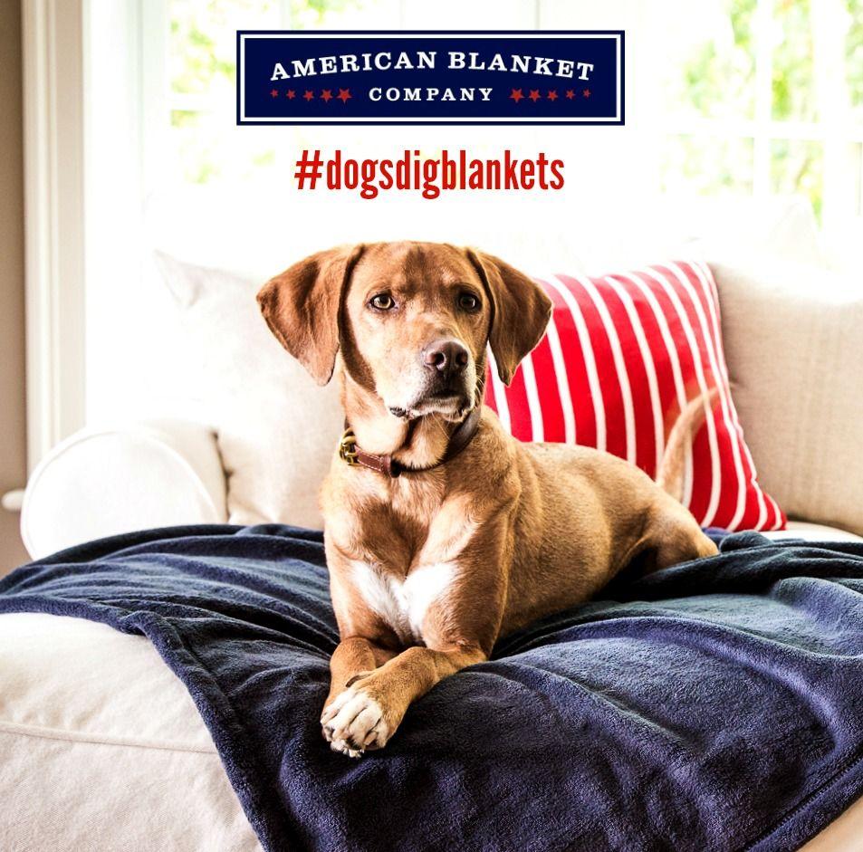 DogsDigBlankets Instagram Giveaway Dog blanket, Soft