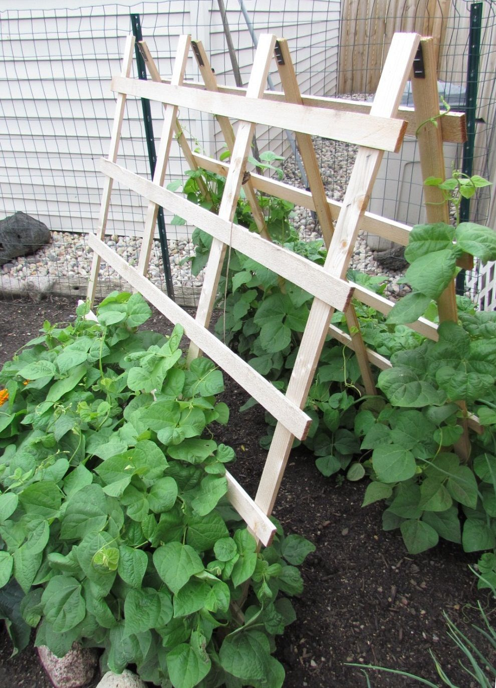 Charming Zucchini Trellis Ideas Part - 10: Green Bean Trellis Wooden Tripod
