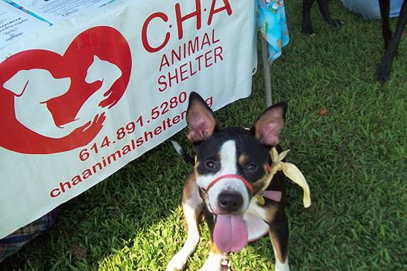 Sheltering Pit Bulls In Ohio At A Time When No Other Local Shelters Were Adopting Out Pit Bulls Cha Animal Shelter Launche Animal Advocacy Pit Bulls Animals