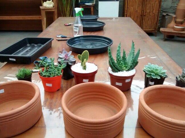 Preparo de Mini Jardins