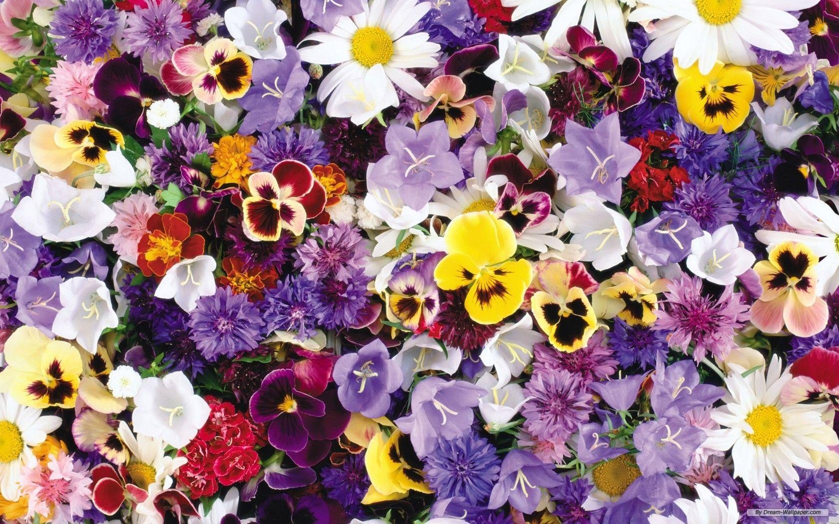 Flower Photos Free Free Wallpaper Free Flower Wallpaper