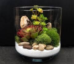 plante grasse pour terrarium