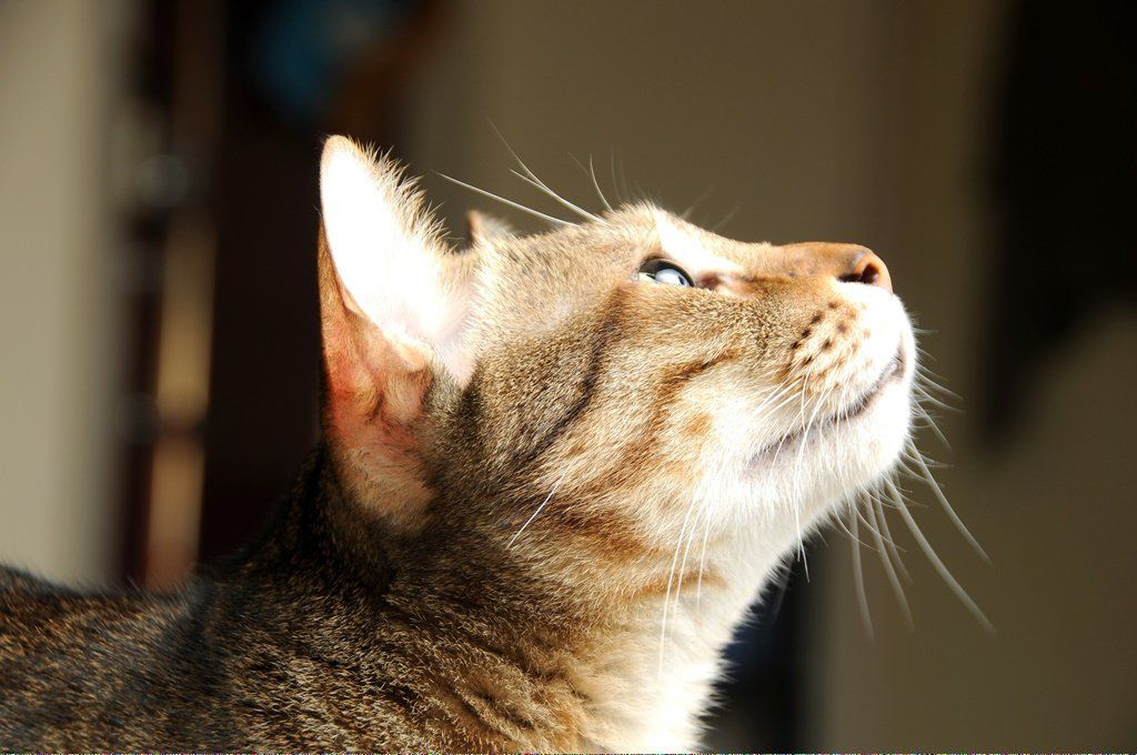 Cats For Free Near Me CatsMakingBiscuits Referral