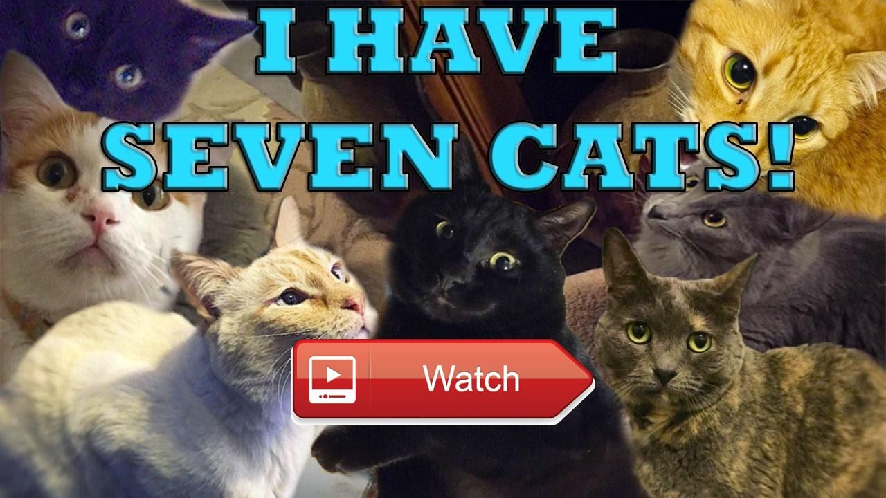 😸 I HAVE SEVEN CATS 😹 Follow my cats on Instagram Subscribe to my cats YouTube channel 😼 on Pet Lovers 🐼