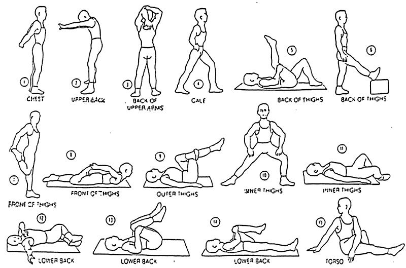 exercices gym stretching
