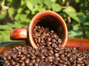 Organic coffee is good for you as well as good for the communities of the Earth. ENJOY!