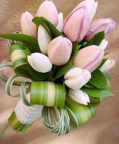Httpcassiafloristptoko bunga di pisangan timur cassia httpcassiafloristptoko bunga junglespirit Choice Image