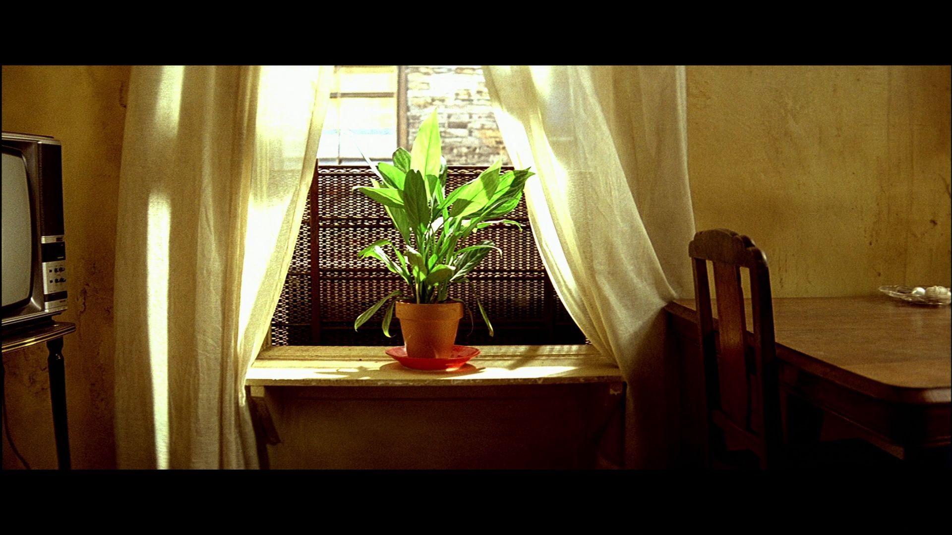Image result for leon the professional plant