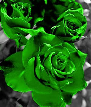 Green Roses ดอกไม ก หลาบ ภาพ