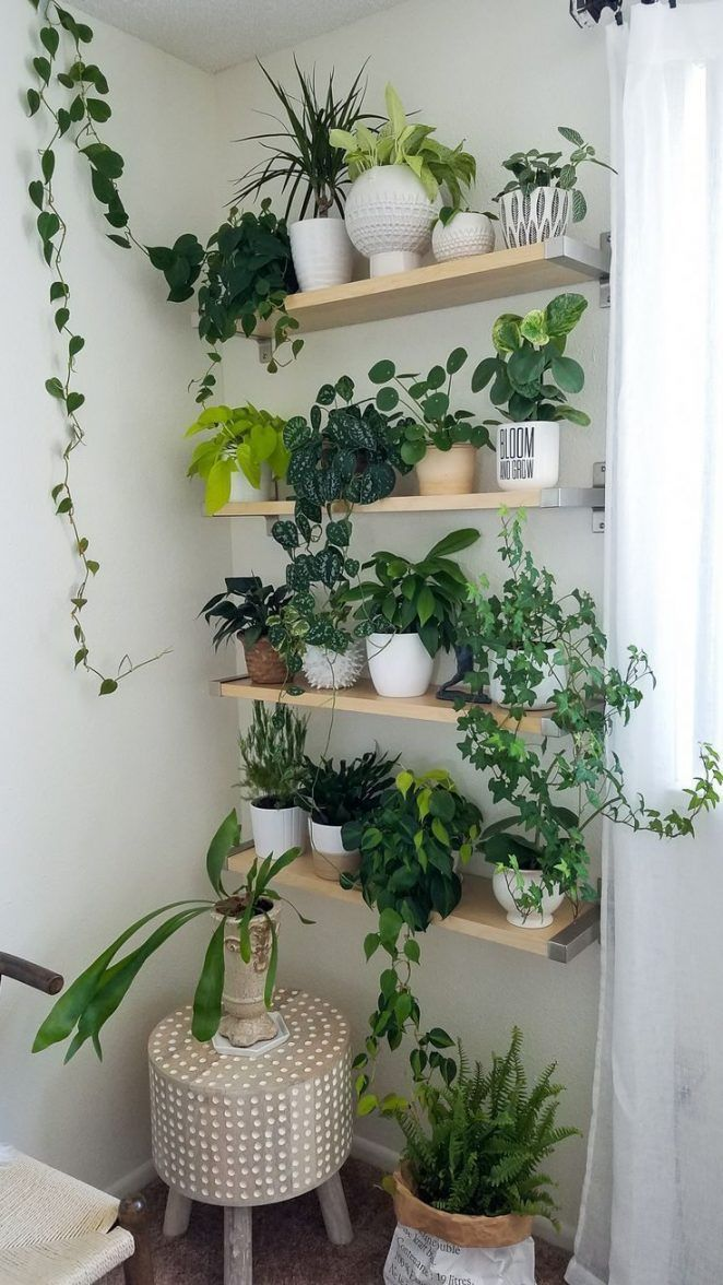 Pour habiller un pan de mur dans un salon, une cuisine ou une salle de bains, on vient installer des plantes sur des étagères toutes simples en bois, à la scandinave