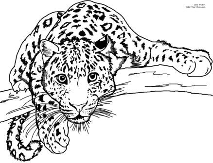 Cute Cartoon Leopard Drawings | leopardo para niños | aprender a ...