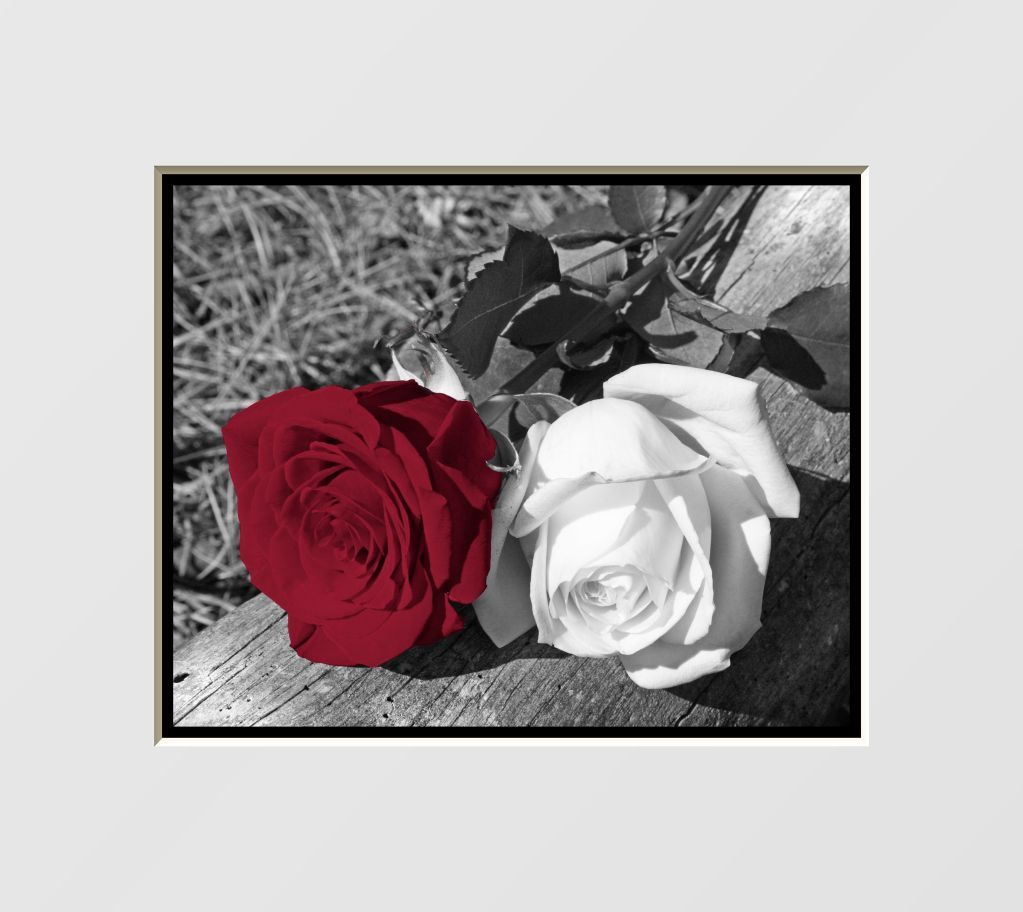 Black u white red rose flowers interior home decor wall art matted