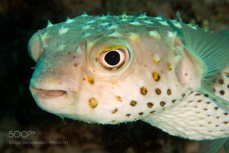 Pin Pa Underwater