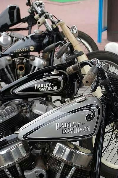 Pin By Sue Ann Stephens On Harley Harley Davidson Motorcycles
