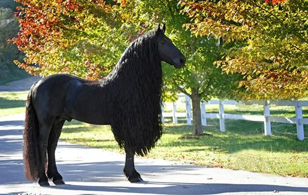 This Horse Is Going Viral for Having the Most Beautiful Hair In ...