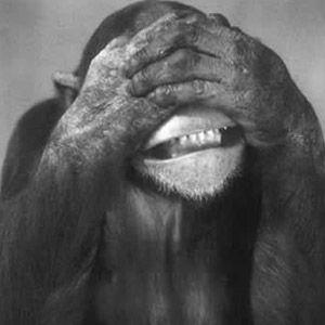Die augen der sich zuhält affe Affe Augen
