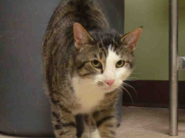 JENGA A1039254 Manhattan ***TO BE DESTROYED 06/25/15