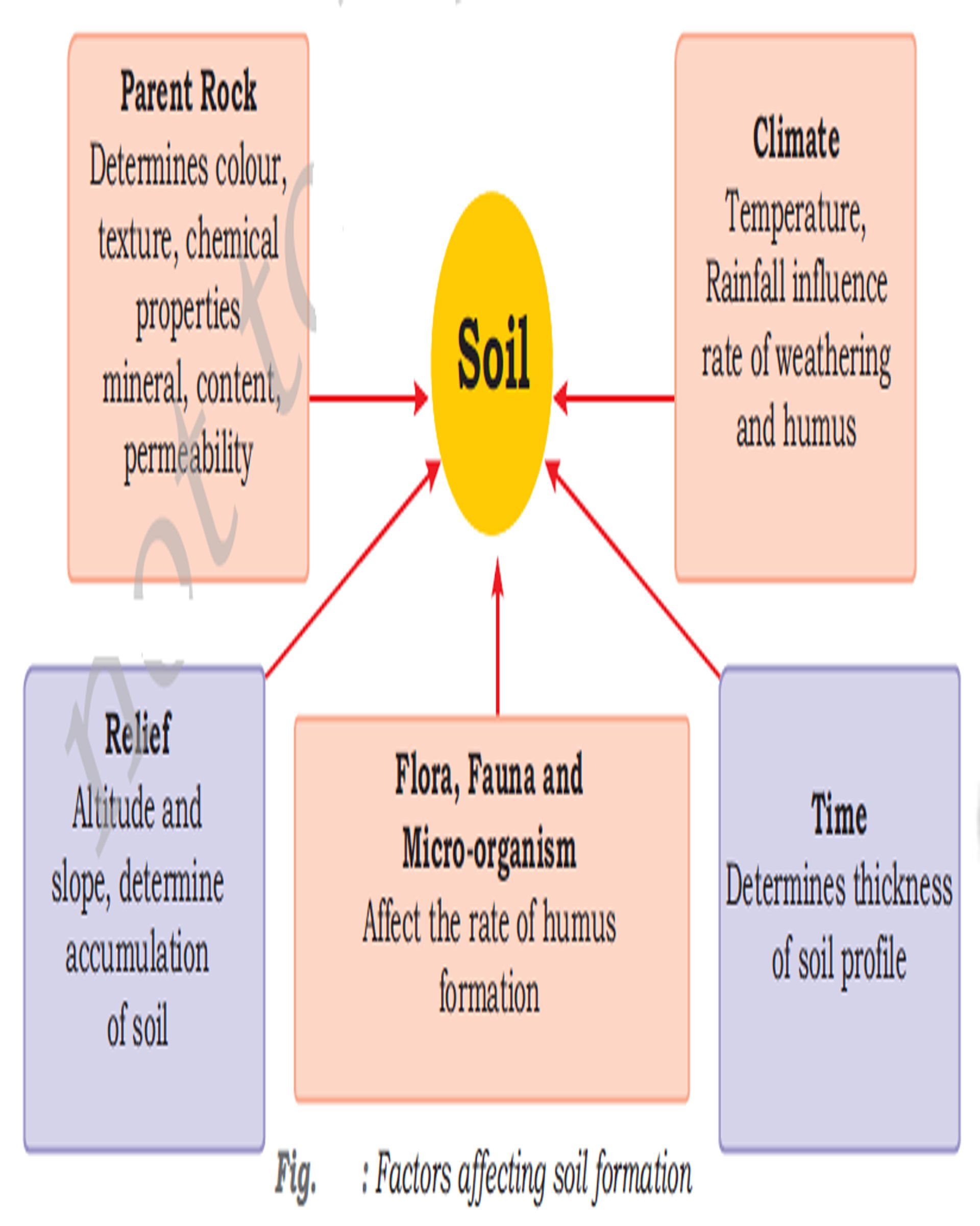 How Climate Biota Topography And Time Affect Soil