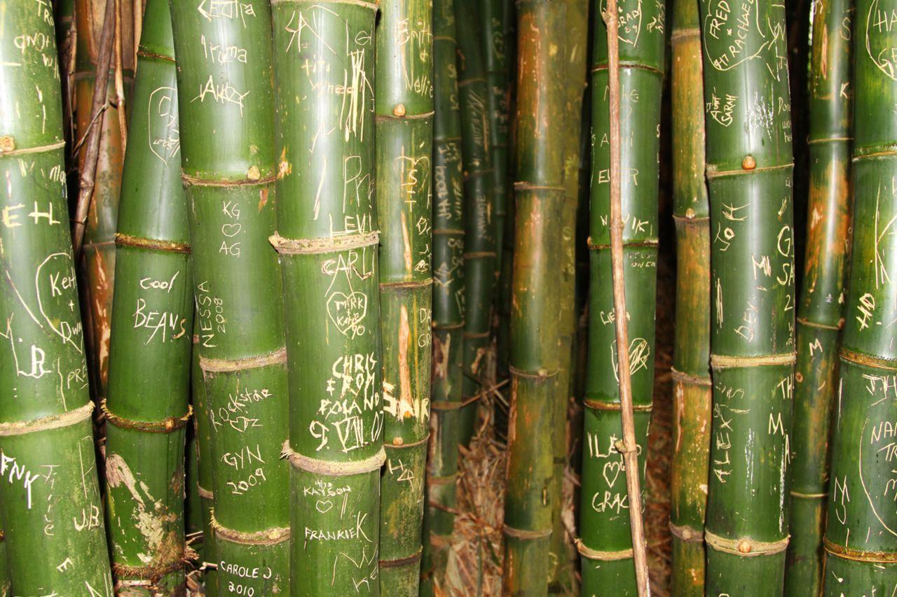 Bamboo Art Image By Emma Lehane On Inspiring Simple Green Beyonce