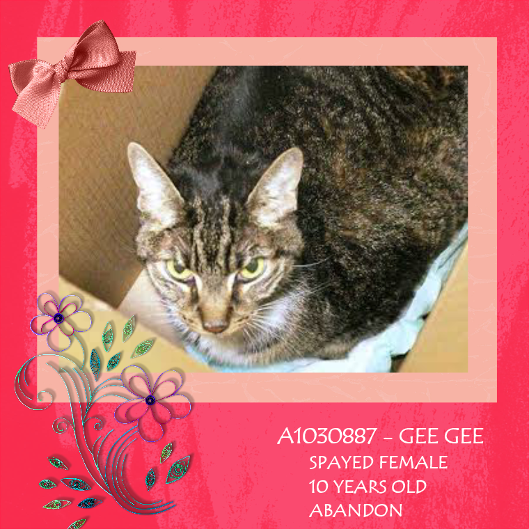 NYC **Sweet Sweet Senior** TO BE DESTROYED 03/25/15 ABANDONED IN A HALLWAY! GEE GEE is calm, relaxed and friendly. ID #A1030887. Spayed female blk tabby & brown Anemic & Possibly Diabetic, Very Sweet GEE GEE -- NEEDS FOLLOW UP VET CARE! https://www.facebook.com/nycurgentcats/photos/a.978008928883761.1073742635.220724831278845/978009178883736/?type=3&theater