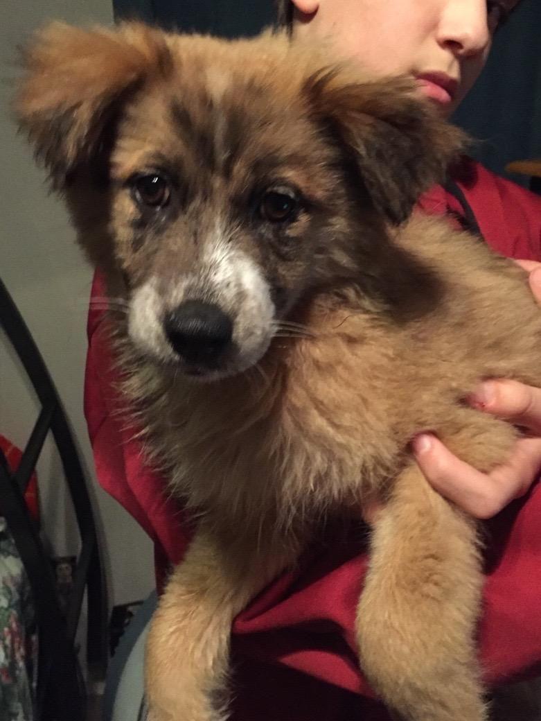 Adopt Mya (Susan Bennett's Team) on Petfinder | Australian ...