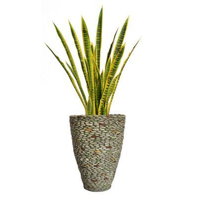 Laura Ashley Home Snake Plant in Fiberstone Planter