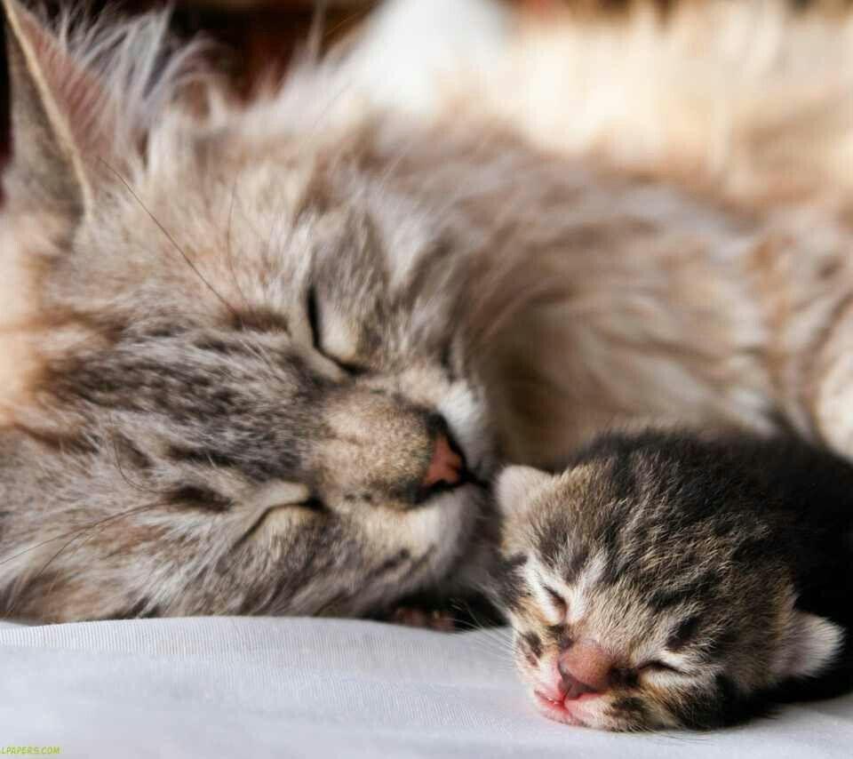 Sleeping kitties cats Pinterest