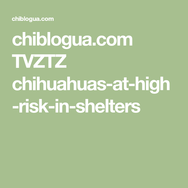 chiblogua.com TVZTZ chihuahuas-at-high-risk-in-shelters