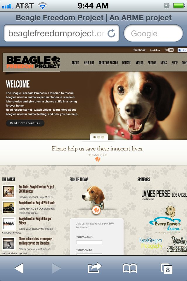 The Beagle Freedom Project Rescues Beagles From Cosmetic Testing