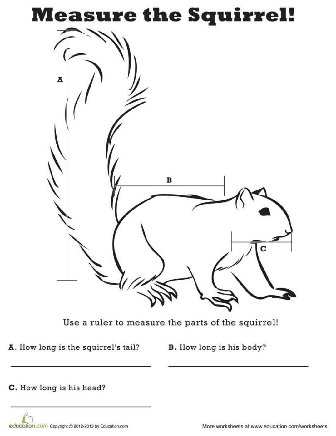 Measure The Squirrel
