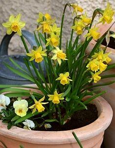 blumenzwiebeln tulpen narzissen krokusse und andere blumenzwiebeln g rtnern pinterest. Black Bedroom Furniture Sets. Home Design Ideas
