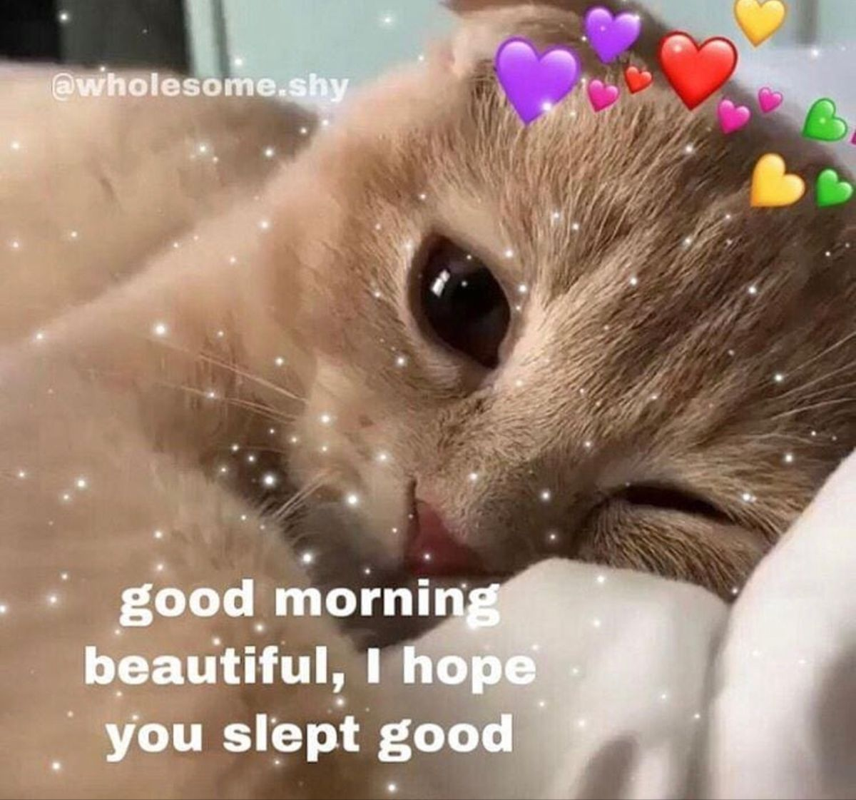 Pin By Amanda Houghton On Wholesome Memes Cute Love Memes Cute Memes Cute Cat Memes